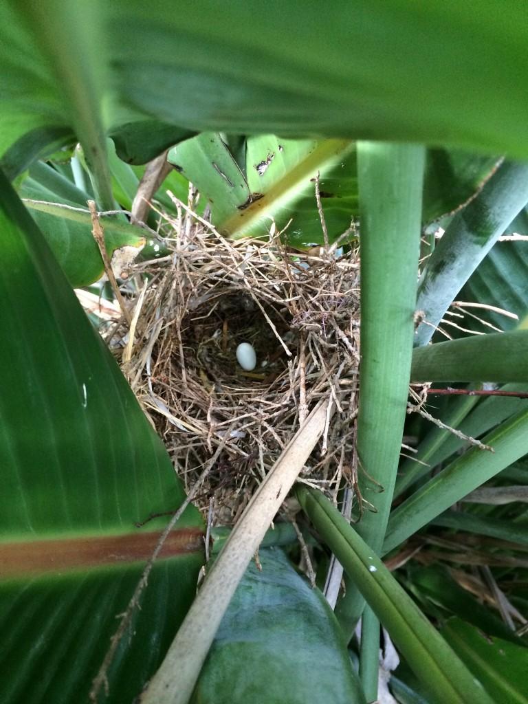 bird nest - Copy